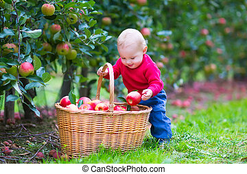 Little boy with apple basket - Cute funny little baby boy...