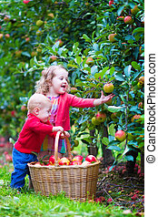 Kids playing in an apple garden - Happy little children,...