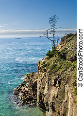 Lone tree on a headland overlooking the ocean - Lone tree on...