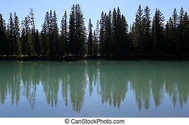 Bow River Tree-line - An evergreen tree line silhouette...