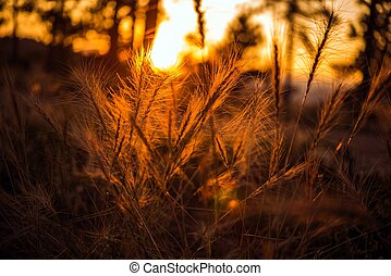 Summer Sunset Meadow. Meadow Grasses and Plants Closeup....