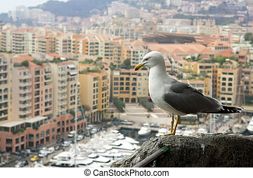seagull looking at a luxury of Monaco - seagull on a...