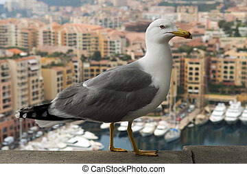 seagull on a background of luxury Monaco - seagull on a...