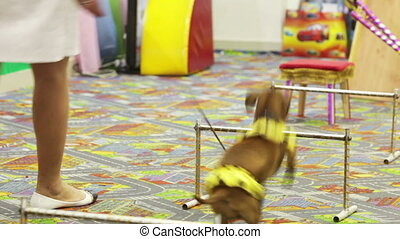 Performances dogs - Well-dressed dog stand on childrens...