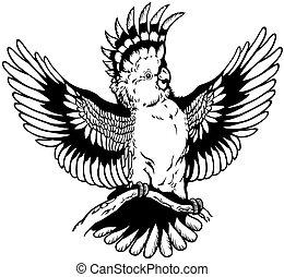 cockatoo, pretas, branca