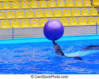 Dolphin plays with the ball in the pool