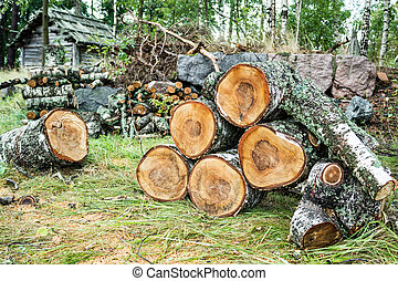 Pile of cut birch logs with an old wooden cabin in the...