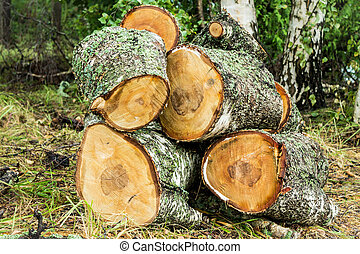 Pile of cut birch logs in the forest