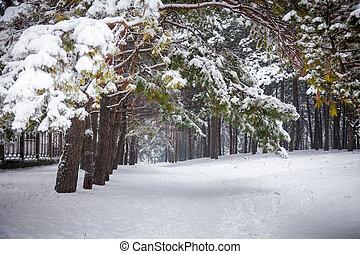 estrada, Inverno, paisagem, floresta