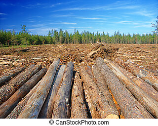 Jack Pines Logging Michigan - Large area of northern...