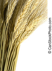 Wheat on White - Sheaves of wheat on white background