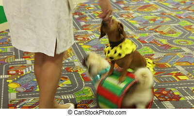 Trained dogs - Performance of trained dogs on children's...