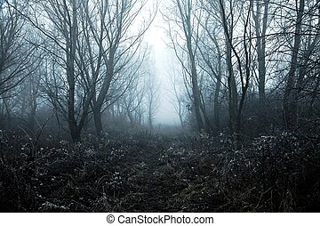 Foggy Winter - Winter forest path with frost