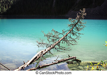 Fallen tree - Tree trunk alling into a turquoise lake