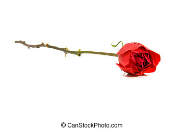 Single Red Rose - Single red rose on white background,...