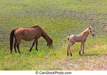 Wild horses: a mare and a foal - Wild horses: a mare and a...