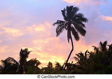 Silhouette of coconut palm trees during sunrise