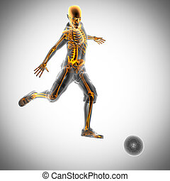 soccer game player radiography image - soccer game player...