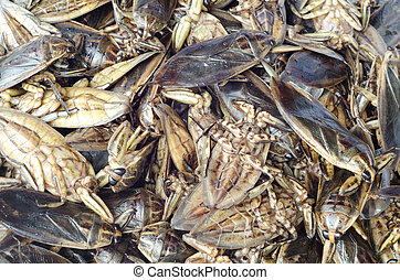Giant Water Bug  in market ,Thailand
