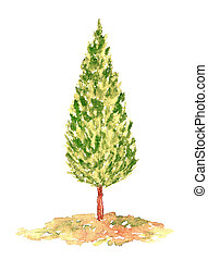 Watercolor Cypress Tree, Hand Drawn and Painted, Isolated on...