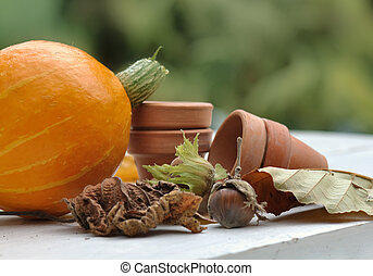 gathering of hazelnut and pumpkin - pumpkin, hazelnuts and...
