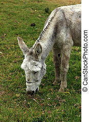 White Mule in a Farmers Pasture