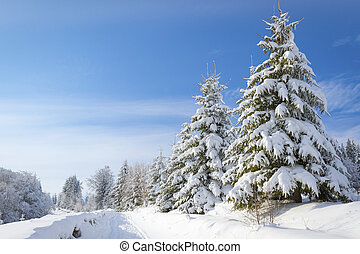 Winter's tale - Winter landscape with high spruces and snow...