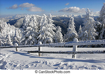 Winter Landscape - Winter landscape with pine trees covered...