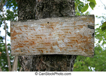 Blank rustic wood sign on tree
