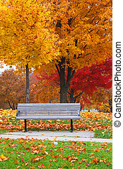 Bench in Fall foliage - Bench under bright autumn trees