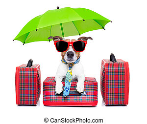 dog vacation - dog with luggage ready to go on summer...