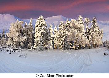 Colorful winter landscape in the mountains. Sunset