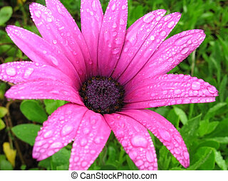 fresh flower - flower with rain droplets, Good for issues...