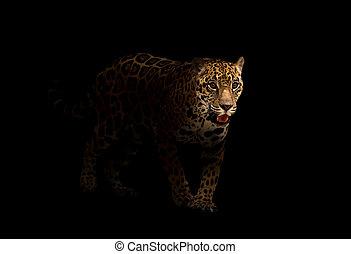 jaguar ( panthera onca ) in the dark - jaguar ( panthera...