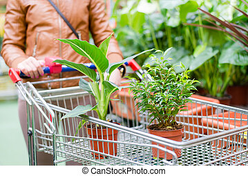 two pot plants standing in a cart solding in a supermarket