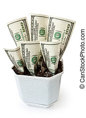 Money grows in a flowerpot isolated on white