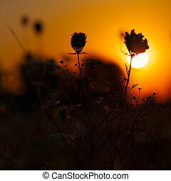 Beauty sunset on the meadow, environmental backgrounds