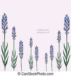 Lavender watercolor. - Vector Illustration of a Lavender...