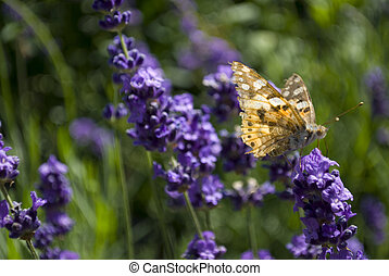 Butterfly on a flower - A butterfly sitting on a flower in...