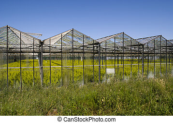 Greenhouse with crops in the netherlands - Holland