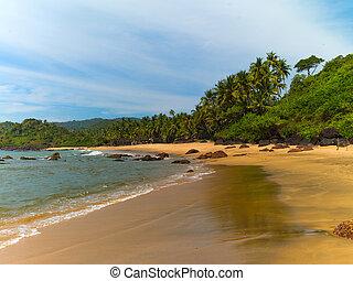 Beach with palm trees - Beautiful sea coast in Goa. India