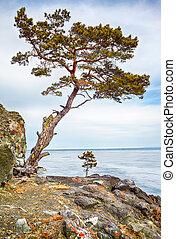 Lonely tree near Baikal lake in Siberia at winter