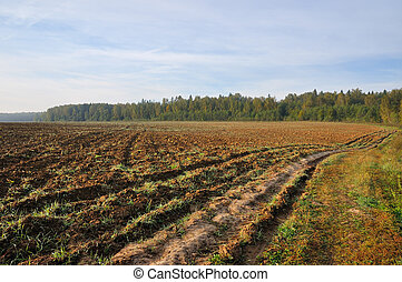 Tillage - Farming field near forest at sunny morning