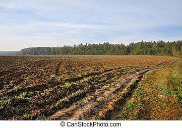 Tillage - Farming field near forest at sunny morning