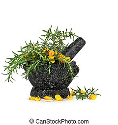 Rosemary Herb and Gorse Flowers - Rosemary herb leaf sprigs...