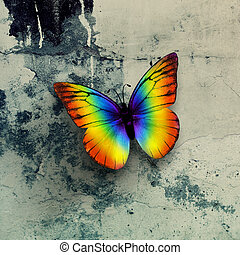 colorful butterfly on grunge wall surface
