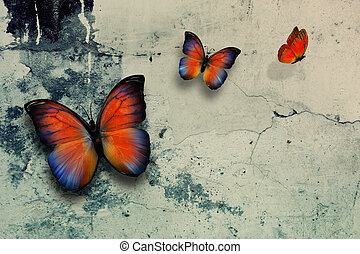 butterflys - beautiful butterflys on grange wall surface