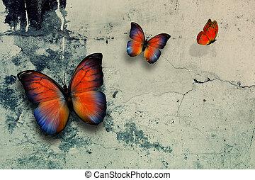 butterflys - beautiful butterflys on grange wall surface