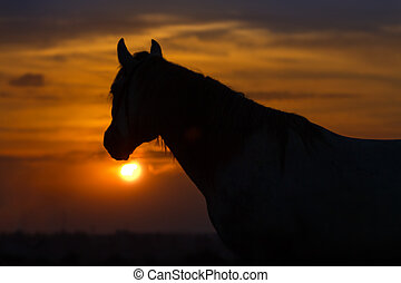 Horse portrait dawn - Beautiful horse silhouette against the...