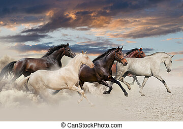 Five horse run gallop in desert at sunset